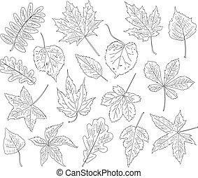 otoño, leaves., conjunto