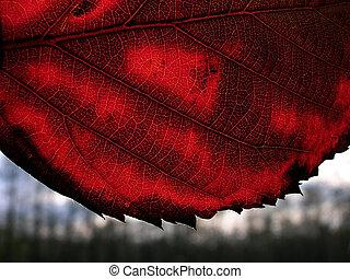 otoño, licencia
