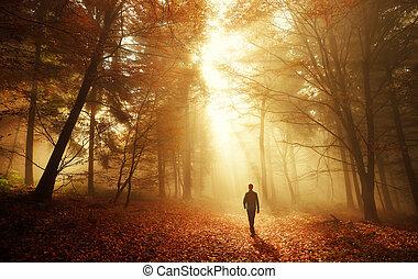 otoño, luz, impresionante, bosque, caminata