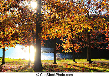 otoño, mañana