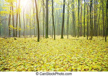 otoño, madera