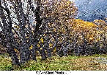 otoño, maravilloso, amarillos