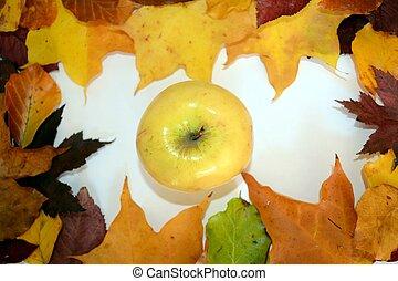 otoño, marco