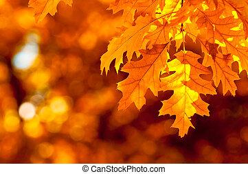 otoño, muy, enfoque poco profundo, hojas