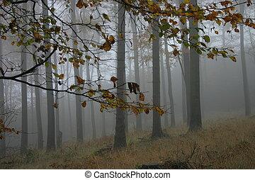 otoño, niebla