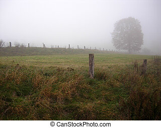 otoño, Niebla, Deprimente, paisaje, árboles