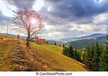 otoño, ocaso, paisaje