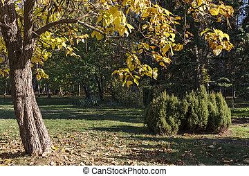 otoño, opinión de la ciudad, sofia, parque, sur