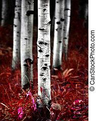 otoño, otoño, álamo temblón, árboles, abedul