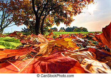 otoño, otoño, paisaje, en el estacionamiento