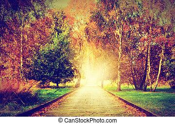 otoño, otoño, park., ruta de madera, hacia, el, sol, luz