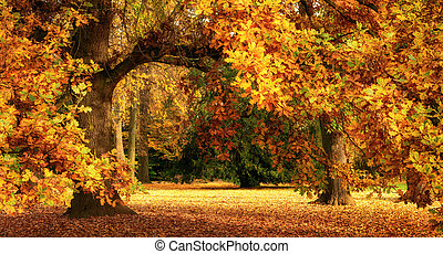 otoño, paisaje, con, un, magnífico, roble
