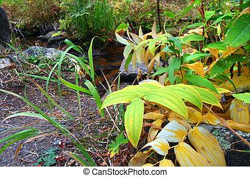 otoño, paisaje, de, montana