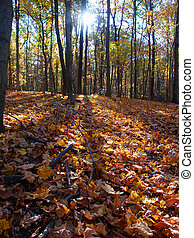 otoño, paisaje, en, central, illinois