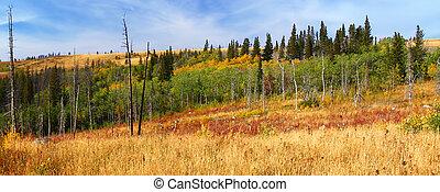 otoño, paisaje, montana