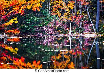 otoño, pantanal, escena, reflexiones