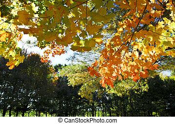 otoño, parque, árboles, otoño