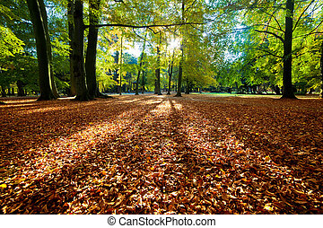 otoño, parque, colorido, otoño