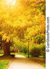 otoño, parque, con, callejón