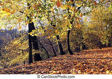otoño, parque, en, día soleado