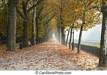 otoño, parque, en, dusseldorf, alemania