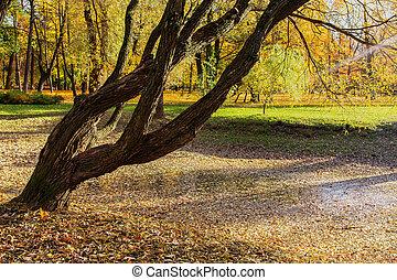 otoño, parque, paisaje