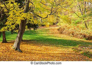 otoño, parque