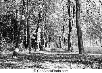 otoño, parque, vista