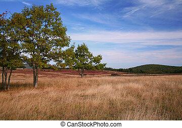otoño, pasto, escena
