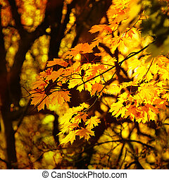 otoño, permisos amarillos