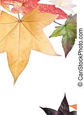 otoño, permisos de otoño
