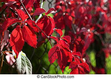 otoño, permisos rojos