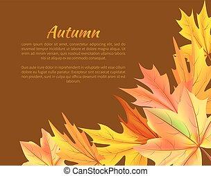 otoño, plano de fondo, con, follaje colorido, en, esquina