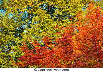 otoño, Plano de fondo, hojas