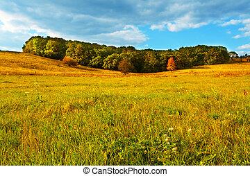 otoño, prado