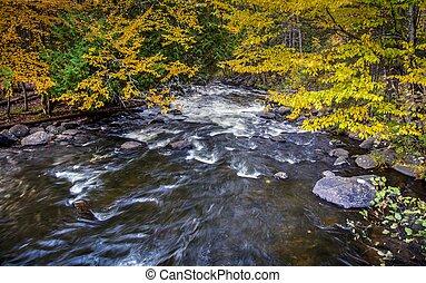 otoño, río, bosque