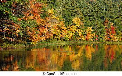 otoño, reflexiones