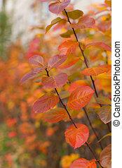 otoño, rojo, rama