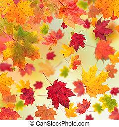 otoño sale, arce, plano de fondo