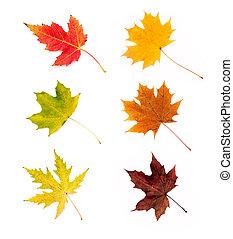 otoño sale, colección, aislado, blanco, plano de fondo
