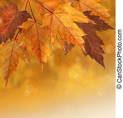 otoño sale, con, enfoque poco profundo, plano de fondo