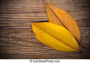 otoño sale, en, de madera, plano de fondo