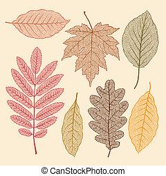 otoño sale, hoja, secado, aislado