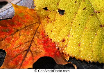 otoño sale, macro