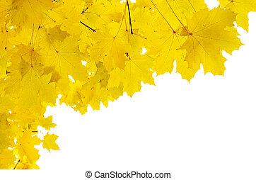 otoño sale, marco