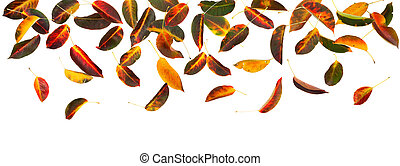 otoño sale, panorama