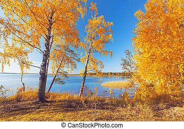 otoño sale, park., otoñal, árboles