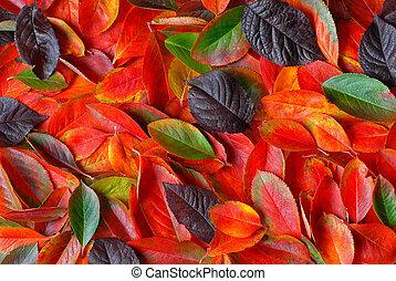 otoño sale, plano de fondo