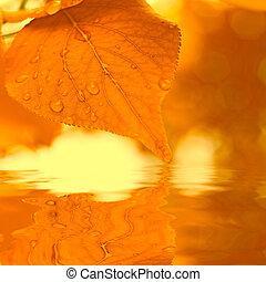 otoño sale, reflejar, en, agua, muy, enfoque poco profundo