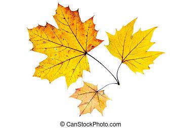 otoño sale, tres